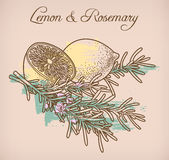 Lemon and rosemary Stock Image