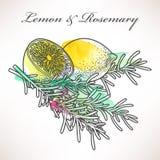 Lemon and rosemary Stock Photos