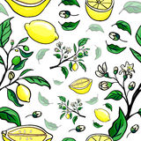 Lemon seamless pattern. vector Stock Photography