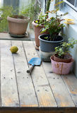 Lemon and shovel on wooden table. In a small garden Royalty Free Stock Photo