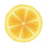 Lemon slice. Yellow lemon slice realistic illustration Stock Images