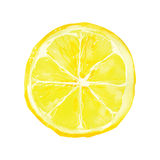 Lemon stock illustration