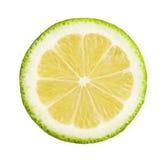 Lemon slice. Green lemon slice close up stock photos