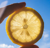 Lemon Slice in the Sun Stock Photo