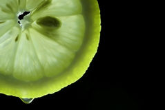 Lemon slice on which a drop of juice dripping Stock Images