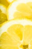 Lemon slices Stock Images