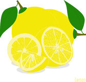 Lemon slices, collection of  illustrations Royalty Free Stock Photos