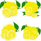 Lemon slices, collection of  illustrations Stock Images