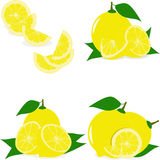 Lemon slices, collection of  illustrations Royalty Free Stock Image