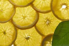 Free Lemon Slices In The Macro Detail Stock Photography - 170324652