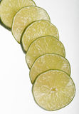 Lemon slices Stock Images