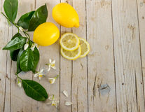 Lemon and slices of lemon decorated with a blossoming tree Stock Photography