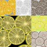 Lemon slices. Royalty Free Stock Photo