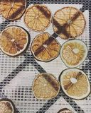 Lemon slices. Translucent yellow lemon slices waiting to be air dried royalty free stock photos