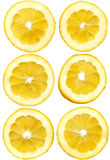 Lemon slices on white Stock Photo