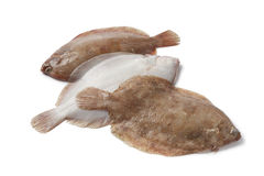 Lemon sole fishes. On white background Royalty Free Stock Photography