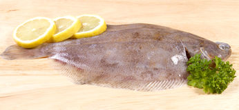 Lemon sole Royalty Free Stock Photography