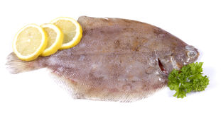 Lemon sole Stock Photo