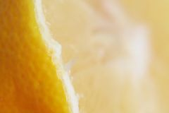 Lemon texture Royalty Free Stock Image