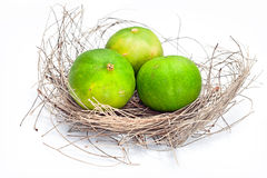 Lemon three in the nest. Royalty Free Stock Image