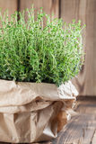 Lemon thyme plant. In a paper bag on wooden background. Shallow dof Stock Photo