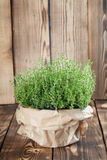 Lemon thyme plant. In a paper bag on wooden background. Shallow dof royalty free stock image