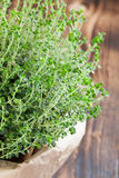Lemon thyme plant. In a paper bag on wooden background. Shallow dof royalty free stock photography