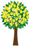 Lemon tree. Isolated on white Royalty Free Stock Image
