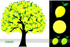 Lemon tree Royalty Free Stock Photography