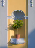 Lemon tree. With lemons in bough-pot Royalty Free Stock Images