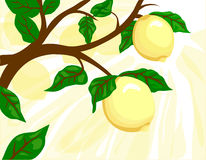 "Lemon Tree. An artistic lemon tree with a sunny ""lemon slice"" background Royalty Free Stock Photography"