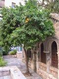 Lemon tree in Athens Stock Photo