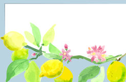 Lemon tree branch, fruits and flowers Lemon. watercolor t stock illustration