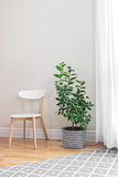 Lemon tree in a bright room Royalty Free Stock Photos