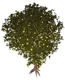 Lemon tree - 3D render Royalty Free Stock Images