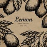 Lemon tree design template. Hand drawn lemon fruit branch with leaves sketch. Stock Photography