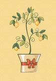 A lemon tree in a festive pot. Royalty Free Stock Images