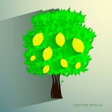 Lemon tree isolated on White background. Vector Royalty Free Stock Photo