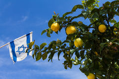 Lemon on a tree and Israeli flag, against the blue sky Stock Image