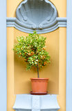Lemon tree. Miniature lemon tree with fruit arch architecture branch citrus stock photos