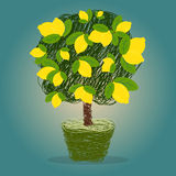 Lemon tree in a pot  vector Royalty Free Stock Images