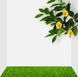 A lemon tree in the room. Royalty Free Stock Photos