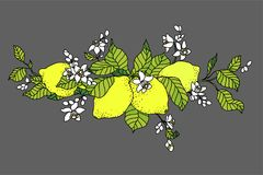 Lemon tree in tattoo style image. Light little flowers with frui stock illustration