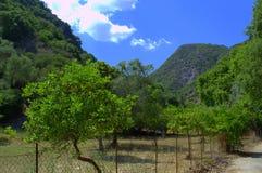 Lemon trees garden Stock Photos