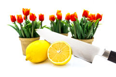 Lemon Tulip Stock Photos