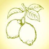 Lemon. Vector drawing Stock Photos