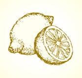 Lemon. Vector drawing Royalty Free Stock Image