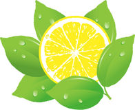 Lemon vector illustration Stock Photography