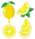Lemon vector illustration Stock Photo