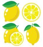 Lemon vector illustration Stock Images